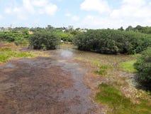 Parque do pantanal de Beddegana, Sri Jayawardanapura, Sri Lanka Imagens de Stock Royalty Free