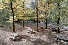 Parque do piquenique da floresta imagem de stock royalty free