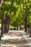 Parque do ponto de vista de Pedro de Alcantara do Sao - Miradouro em Portugal Fotografia de Stock