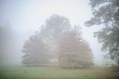 Parque do silêncio do outono com as árvores na névoa Imagem de Stock
