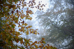 Parque do silêncio do outono com névoa Imagem de Stock