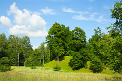 Parque do verão, árvores Imagem de Stock Royalty Free