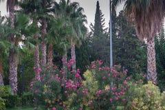Parque do verão com árvores, flores, montanhas e palmeiras em Antalya, Turquia Imediatamente antes do pôr do sol Imagens de Stock Royalty Free