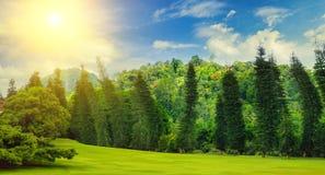 Parque do verão, conversão, prado verde e sol no céu azul Imagem de Stock Royalty Free