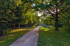 Parque do verão na manhã Imagem de Stock