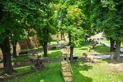 Parque dos dinossauros perto da fortaleza Kalemegdan de Belgrado foto de stock royalty free