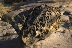 Parque dos fósseis em Gujarat Fotografia de Stock Royalty Free