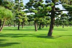 Parque dos pinheiros Imagens de Stock Royalty Free