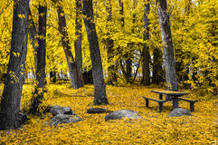Parque dourado Foto de Stock Royalty Free
