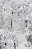 Parque durante nevadas fuertes fotografía de archivo
