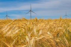 Parque eólico costero en el medio de un campo de trigo, Botievo, Ucrania Imagen de archivo libre de regalías