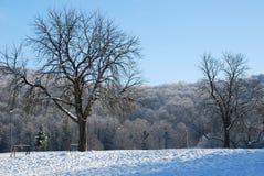 Parque e invierno de Andrevlje Imágenes de archivo libres de regalías
