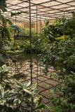 Parque Eduardo VII Estufa Fria Imágenes de archivo libres de regalías
