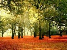 Parque em cores brilhantes Fotos de Stock Royalty Free