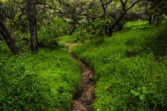 Parque em Forest Golden Gate Trail foto de stock