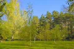 Parque em novembro Imagem de Stock
