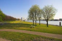 Parque em Rotterdam Imagem de Stock