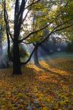 Parque em Wloclawek Imagem de Stock Royalty Free