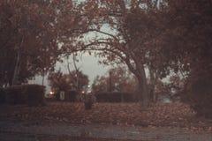 Parque en el aretsou, otoño imagen de archivo