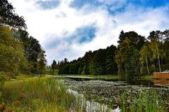 Parque en el bosque Imágenes de archivo libres de regalías