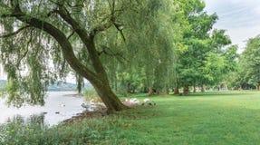 Parque en el lago Lago Varese y la zona verde de Schiranna foto de archivo