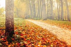 Parque en el otoño con las hojas caidas amarilleadas - paisaje coloreado de niebla del otoño Fotos de archivo libres de regalías