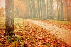 Parque en el otoño con las hojas caidas amarilleadas - paisaje coloreado de niebla del otoño Foto de archivo libre de regalías