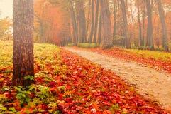 Parque en el otoño con las hojas caidas - paisaje coloreado de niebla del otoño Imagenes de archivo