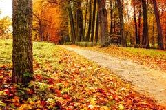 Parque en el otoño con las hojas caidas - paisaje colorido del otoño Imágenes de archivo libres de regalías