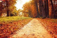 Parque en el otoño con las hojas caidas - paisaje colorido del otoño Imagen de archivo libre de regalías