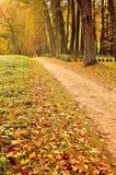 Parque en el otoño con las hojas caidas - paisaje del otoño Fotografía de archivo libre de regalías
