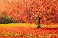 Parque en el otoño con las hojas caidas - paisaje del otoño Imagenes de archivo