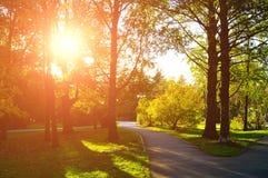 Parque en el otoño con las hojas caidas - paisaje del otoño Fotografía de archivo