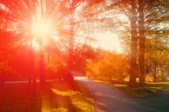 Parque en el otoño con las hojas caidas - paisaje del otoño Imagen de archivo libre de regalías
