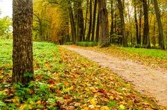 Parque en el otoño con las hojas caidas - paisaje del otoño Imagen de archivo