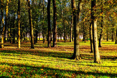Parque en el otoño con las hojas caidas - paisaje del otoño Imágenes de archivo libres de regalías