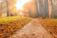 Parque en el otoño con las hojas caidas rojas - paisaje coloreado brumoso del otoño Fotografía de archivo