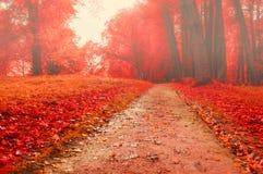 Parque en el otoño con las hojas caidas rojas - paisaje coloreado de niebla del otoño Imágenes de archivo libres de regalías