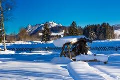 Parque en invierno imágenes de archivo libres de regalías