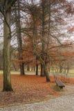 Parque en la cuesta durante otoño fotos de archivo libres de regalías