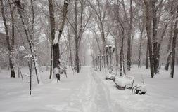 Parque en la nieve lley en el parque Imagenes de archivo