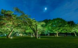 Parque en la noche Fotos de archivo