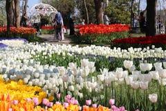 Parque en la primavera Imagen de archivo libre de regalías