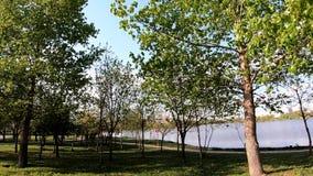 Parque en la tarde del lago almacen de metraje de vídeo