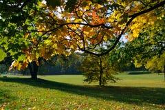 Parque en octubre Imagen de archivo