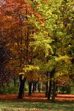 Parque en otoño Imagenes de archivo