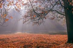 Parque en otoño Imagen de archivo libre de regalías