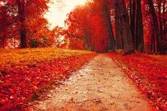 Parque en otoño con las hojas caidas rojas - el otoño coloreó paisaje Imagenes de archivo