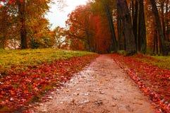 Parque en otoño con las hojas caidas rojas - el otoño coloreó paisaje Fotos de archivo