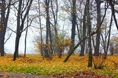 Parque en otoño en tiempo de niebla Fotografía de archivo